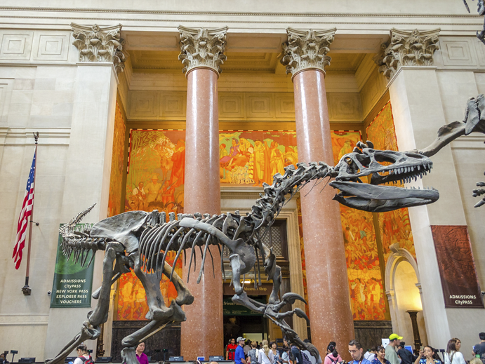 Museu Americano de Historia Natural, Nova York